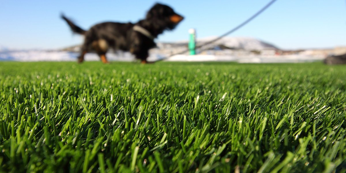 GrassTex Pet Turf